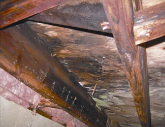 mold and rot in a Long Beach crawl space